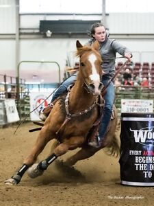 """""""My Own Firewater"""" Barrel Horse‼️"""