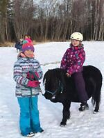 Pony Play Day Camp