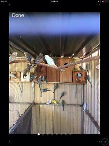 Free Birds Penrith Penrith Area Preview