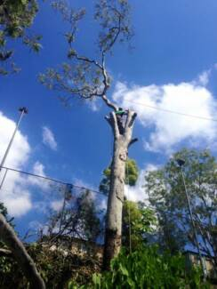 Brisbane Tree And Yard Specialists