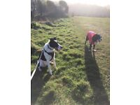 Dog Walking & Pet Sitting in Torquay/Newton Abbot - Walking from £8.50 per hour