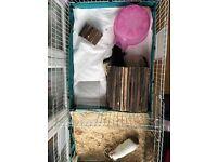 2 x Female Guinea Pigs plus Indoor Habitat and Accessories