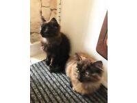 Two cute fluffy kittens