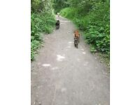 Paws 4 Thought ( dog walking boarding )