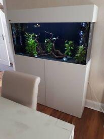 Elegant Tropical Aquarium