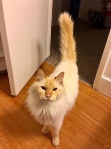 Free cat - needs a loving home asap