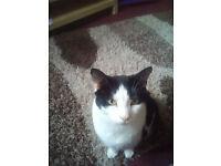 Male indoor cat