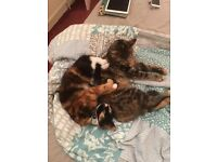 Two cats for rehome g