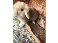 New home needed for my bunny!