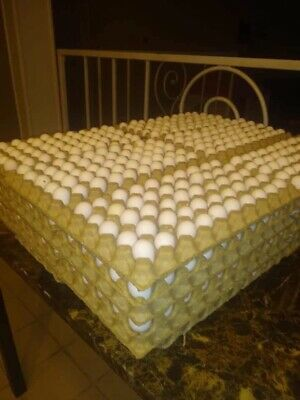 50 Premiumnorthern Bobwhite Quail Fertile Hatching Eggs Conservation