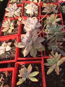 Plant Sale! Saturday and Sunday 10 till 2 only Boulder Kalgoorlie Area Preview