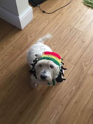 handmade crochet rasta hat dreadlocks pet cat dog puppy wig fancy dress costume