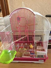 cage with singing canary and zebra finch