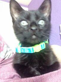 23weeks old kitten