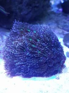 Saltwater Reef Corals, Fish, Supplies and Support