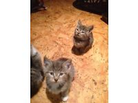 Male and female Kittens
