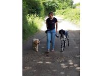 Paddy Paws Spennymoor. Dog walking, puppy visits, training and nail clipping.
