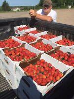 Strawberry pickers needed