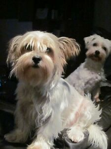 Doggie Day Care     these are my two girls Molly and Willow Tugun Gold Coast South Preview