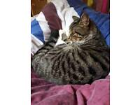 Lost tabby cat leeds/bradford airport area