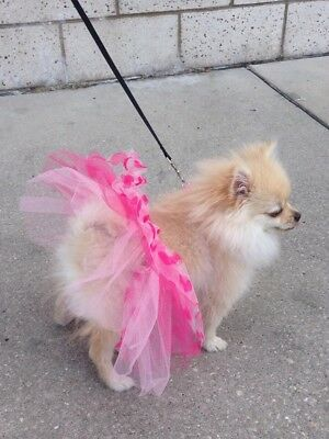 Doggy Dress Bret Michaels Pets Rocks Tutu And Other Brand Kerchief Neck - Michaels Hunde Kostüm