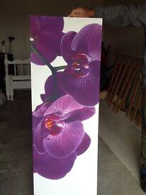 Large purple canvas x 2