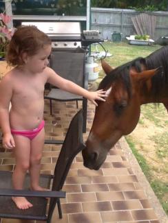 6 year old stallion