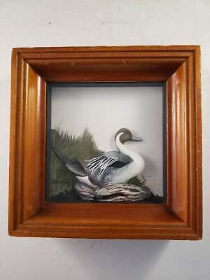 Joseph Q Whipple Pintail Shadow Box Famous Artist 5x5x1.75