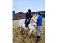 For sale Welsh cob pony for sale £600 pounds with tack