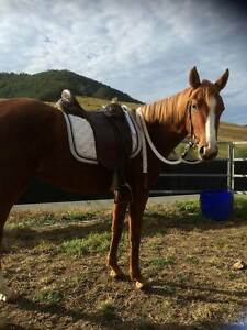 Stunning ASH Mare Gloucester Gloucester Area Preview