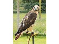 Falconry Classes - Exeter