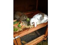Rabbits / 4ft Double Hutch / Hutch Cover