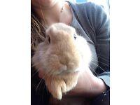 Cute Rabbits **NEED HOMES ASAP**