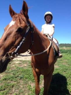 Melissa's Equestrian Academy Moonbi Tamworth Surrounds Preview