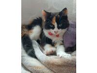 Little Female Cat for sale