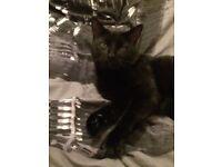 all black male cat needing loving home
