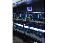 quality tropical fish newport