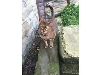 Fergall the Bengal cat is Missing - Have You Seem Him?