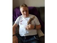 Very tame male Bearded Dragon- 20 months old.
