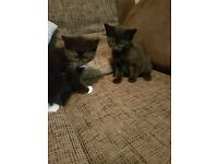 4 Kittens