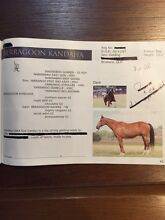 Polo or Polocrosse horse for sale Nerang Gold Coast West Preview