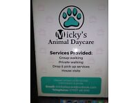 mickeys animal daycare