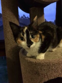 May is looking for her forever home Taree Greater Taree Area Preview