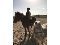 2 HORSES FOR LOAN