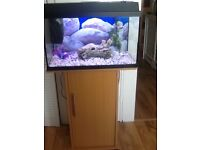 2 ft fish tank and tand conpleat set up vgc