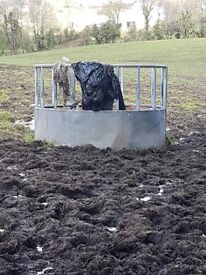 RING ROUND BALE FEEDER HAY HAYLAGE PONY HORSE COB SHEEP COW CATTLE