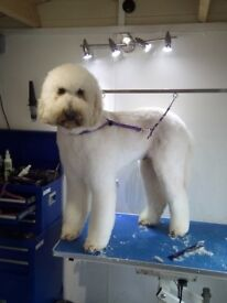 Dog and Bone Dog Grooming Mobile Service
