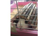 9 month old female Netherland dwarf rabbit