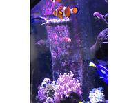 marine aquarium aquareef