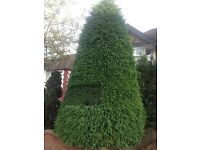 Tree cutting tree surgeon services hedge trimming cutting garden clearance